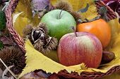 Autumnal Fruit Composition In A Basket