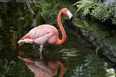 Pink Flamingo Corrected