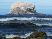 Bass Rock, North Berwick, Scotland