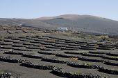 stock photo of semi-arid  - Typical vineyard in La Geria Lanzarote Canary Islands Spain - JPG