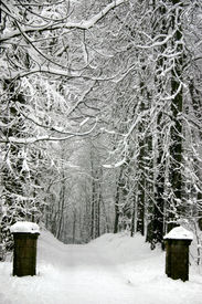 foto of winter trees  - park in winter with lots of snow - JPG