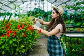 Young Woman In Apron And Hat Is Spraying Water On Plants In Greenhouse Using Spray Bottle Enjoying W poster
