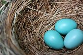 Ovos de Robin