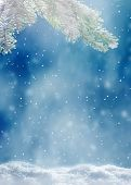 Beautiful Snowy Winter Landscape With A Snowy Fir Branch, Snowflakes And Blue Sky. Winter Christmas  poster