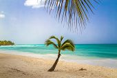Look At The Caribbean Sea Through The Branches Of A Tropical Plant. Landscape Of Paradise Tropical I poster