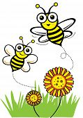 image of honey-bee  - Happy bee - JPG