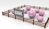 Concept of bank with some piggy banks in a paddock