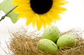 Green Eastereggs in Easter nest with Sunflower