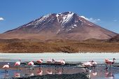 stock photo of eduardo avaroa  - Bolivia the most beautifull Andes in South America - JPG