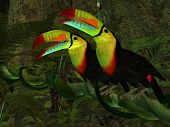 Toucan Jungle