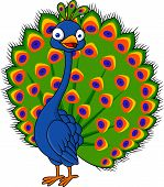 Peacock cartoon