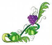Illustration of a vine fruit on a white background