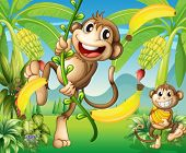 stock photo of banana tree  - Illustration of two monkeys near the banana plant - JPG