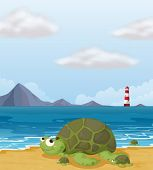 Illustration of a turtle in the shore