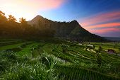 Rice fields of Bali island at sunset. Indonesia