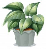 Illustration of a plant in a pot on a white background