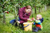 Adorable Toddler Boy Of Two Years And His Mother Picking Red Apples In An Orchard