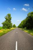 Long Asphalt Road With Green Trees