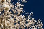 Bunch Of Delicate Dry Plants Against Blue Background