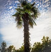 southern palm against the blue sky