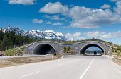 Animal overpass, Banff