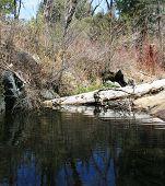 Doane Creek