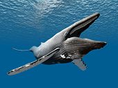 image of whale-tail  - Computer generated 3D illustration with a Humpback Whale - JPG