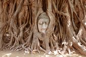 The Head Of Sandstone Buddha In Tree Roots At Wat Mahathat, Ayutthaya, Thailand