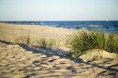 picture of dune grass  - Sand dunes near to the sea with grass - JPG