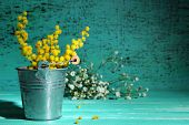 pic of mimosa  - Twigs of mimosa flowers in pail on blue wooden table - JPG