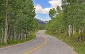 Driving through Aspen Forest