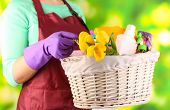 Housewife holding basket with cleaning equipment on bright background. Conceptual photo of spring cleaning.