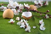 Spring Flowering Branches Of Apricot And Eggshell