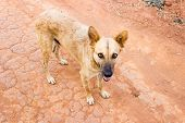 street dog with sharp penitrating eyes with its mouth open
