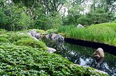 Japanese Garden And Pond In Saint Paul