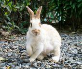 Panic Wild Rabbit On Stone Floor