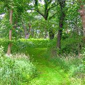 Woodland Hiking Trail Illinois