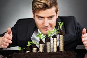 Businessman Protecting Coins In Saplings