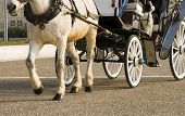 foto of carriage horse  - Dirty horse pulling a carriage on the street - JPG