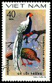 Vintage  Postage Stamp. Lophura Nycthemera.