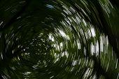 Spiral Effect In Forest