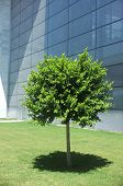 Planted tree in front of  a building