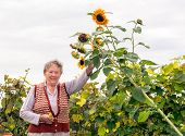 Happy Senior Woman Holding A Sunflower Plant