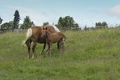 foto of colt  - Shot of the mare with colt on horse lot - JPG