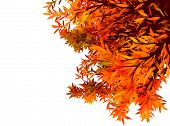 Colorful Autum Background With  Leaves