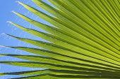 Palm Leaf Nature Background