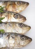 Fresh Sardines On White Background