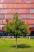 Red office building and green tree
