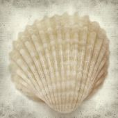 stock photo of cockle shell  - textured old paper background with cockle shells - JPG