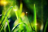 Green grass bokeh background